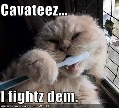 Fight 'em